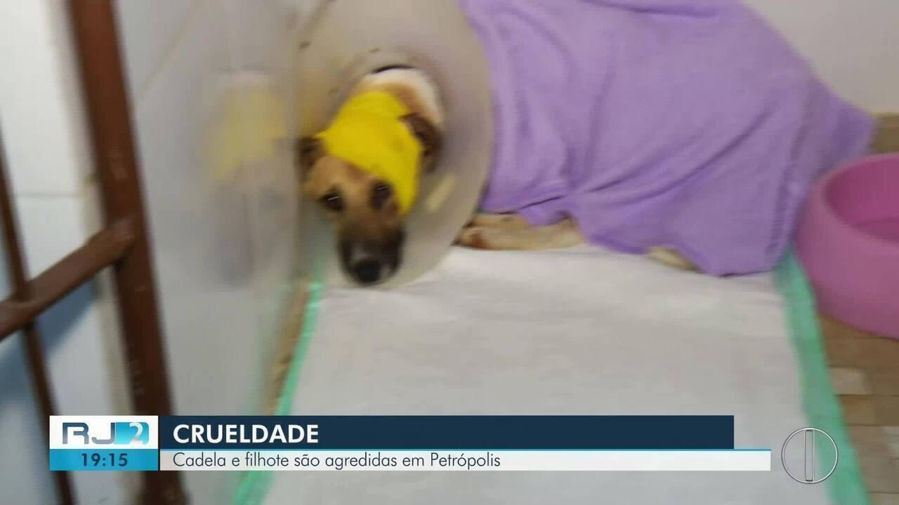 Cadela e filhote sofrem maus tratos e chegam até ser baleadas em Petrópolis