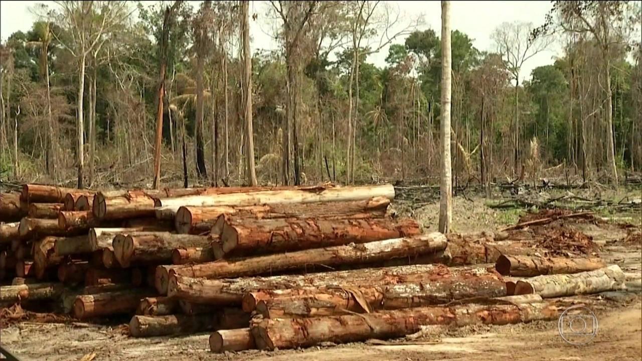 Governadores da Amazônia buscam doadores internacionais para combater desmatamento