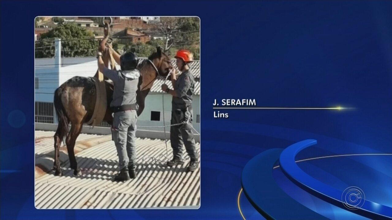 Cavalos sobem em telhado e resgate mobiliza Corpo de Bombeiros em Lins