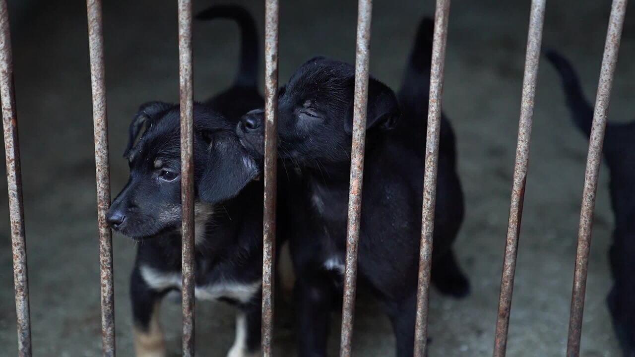 Mais de 170 mil animais abandonados estão em ONGs esperando por adoção