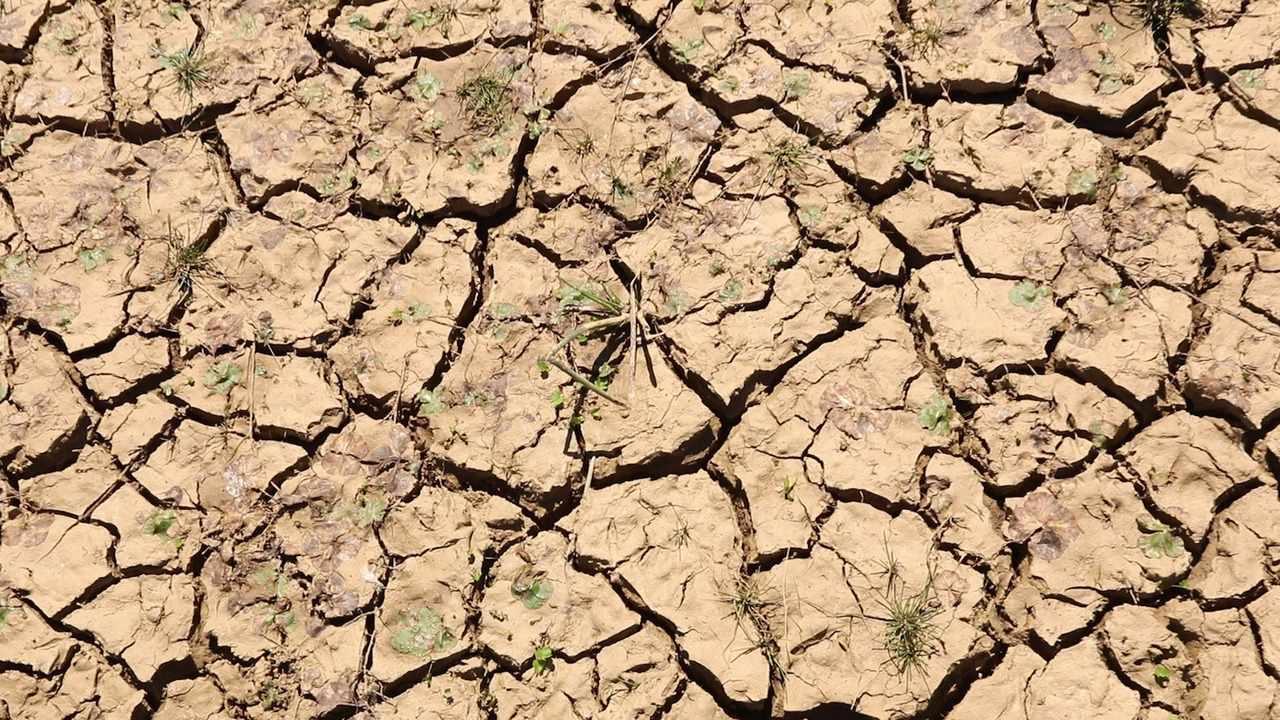 Desertificação ameaça áreas da caatinga e pode ser irreversível