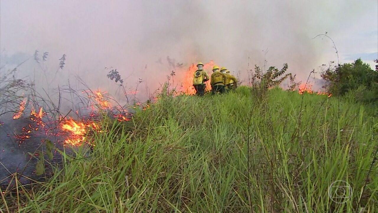Organização Meteorológica Mundial alerta para o impacto dos incêndios florestais