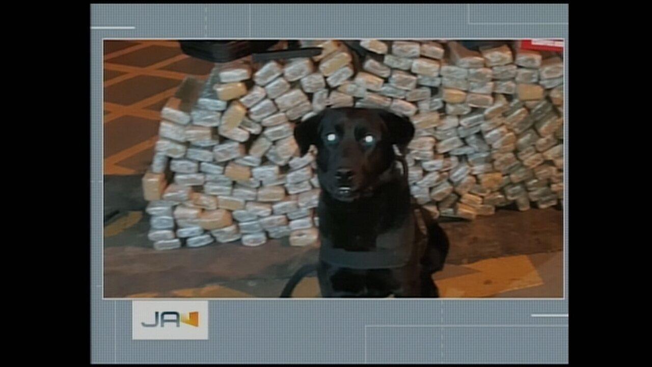 Polícia encontra pacotes de maconha escondidos em fundo falso de carreta no Oeste de SC