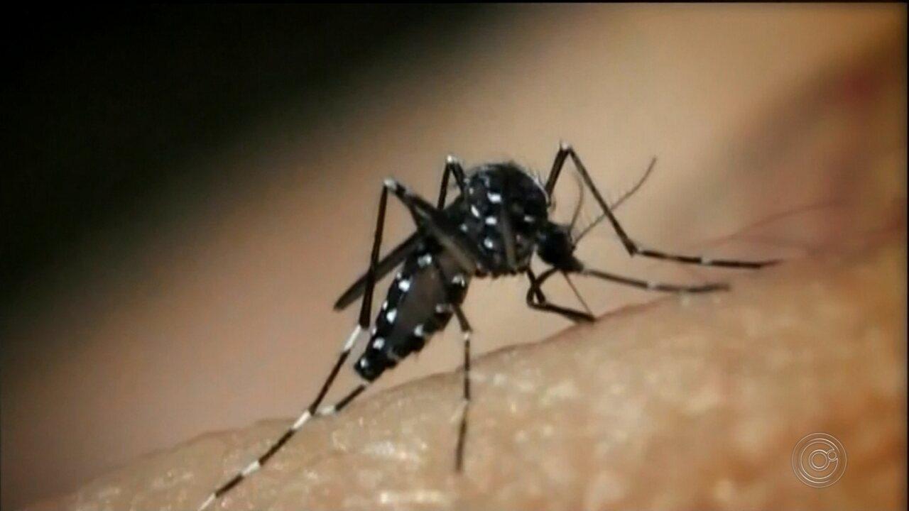 Número de casos de dengue aumenta na região de Itapetininga