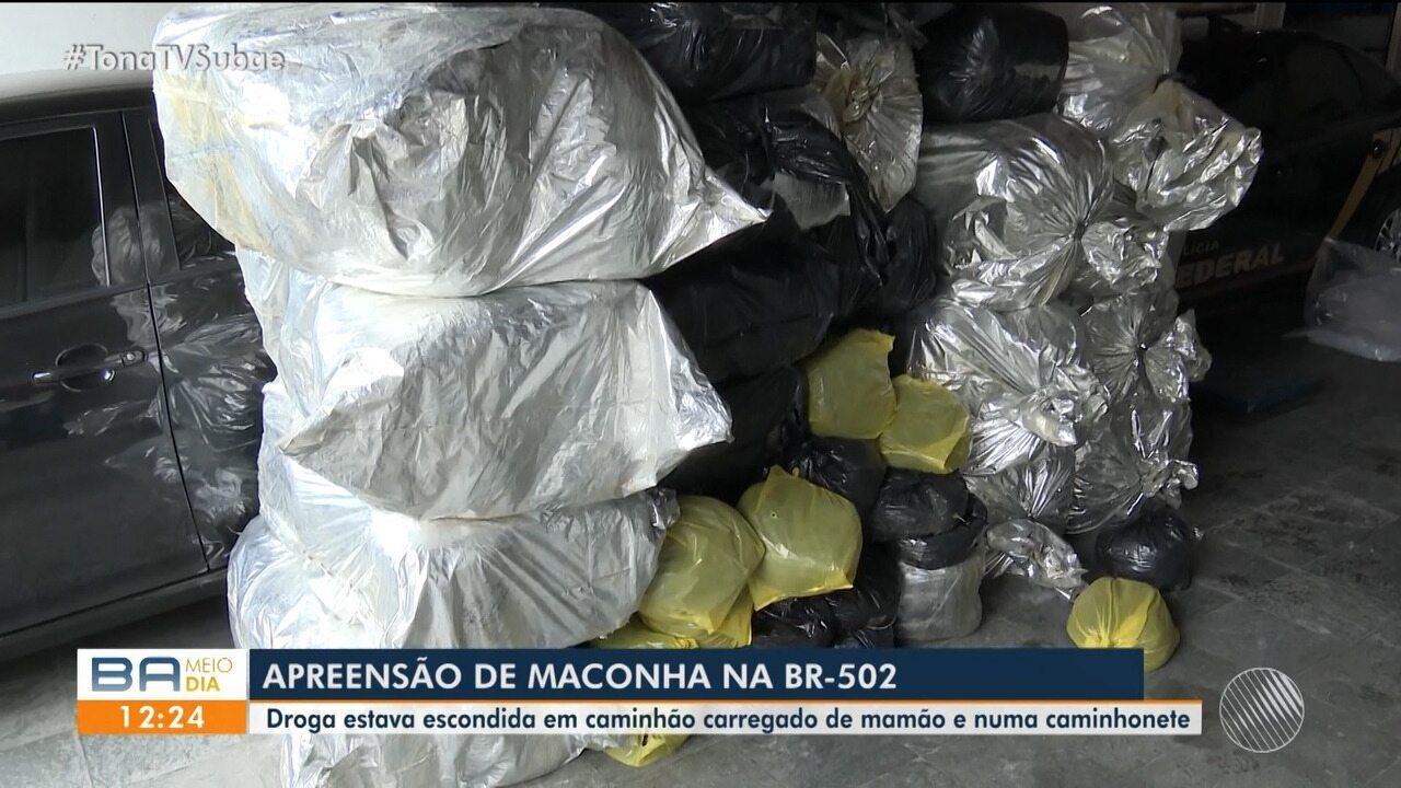 Cerca de 1 tonelada de maconha é apreendida na BA-502, em São Gonçalo dos Campos