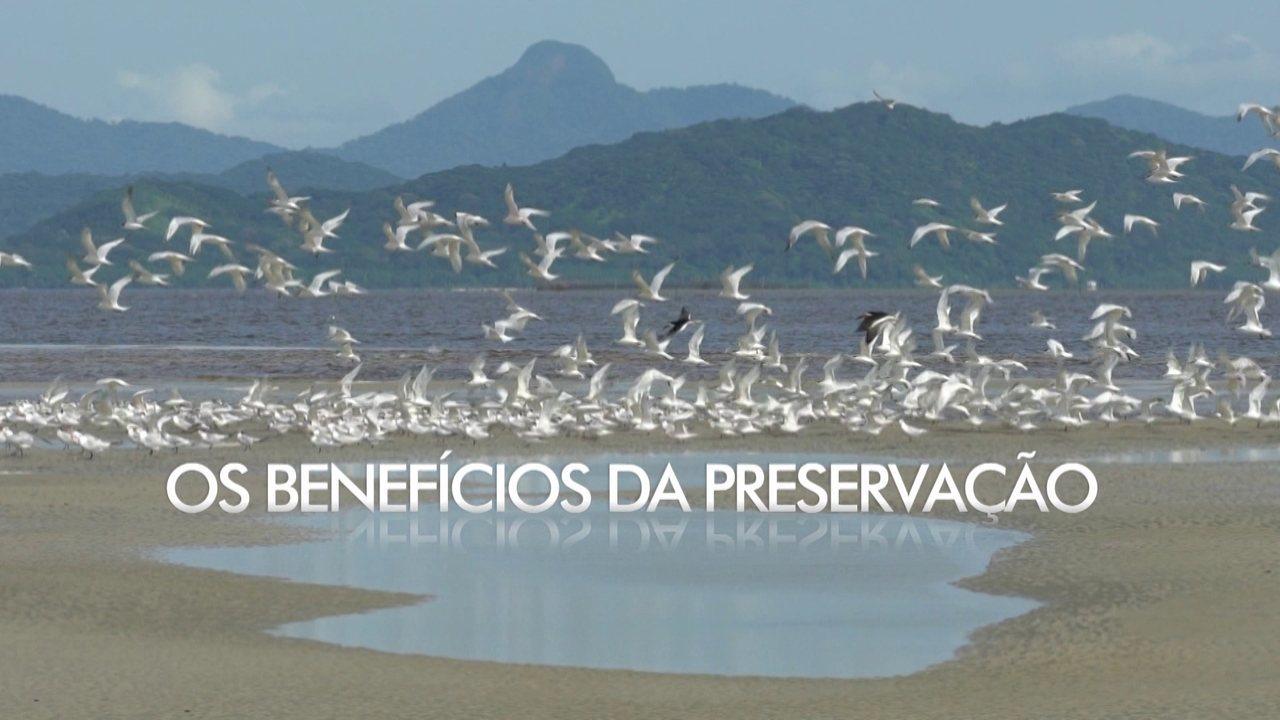 Extra: Os benefícios da preservação dos mangues