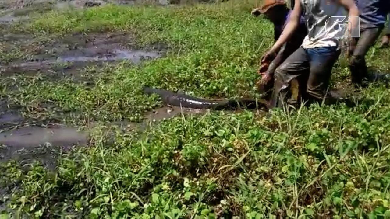 Imagens mostram peixes presos na lama sendo resgatados em Talismã