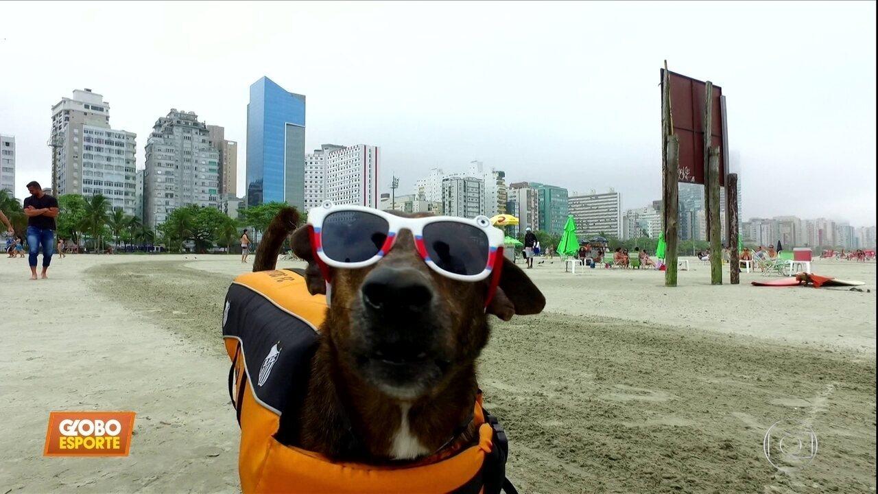 Conheça o Parafina, o cachorro que vai representar o Santos no surfe