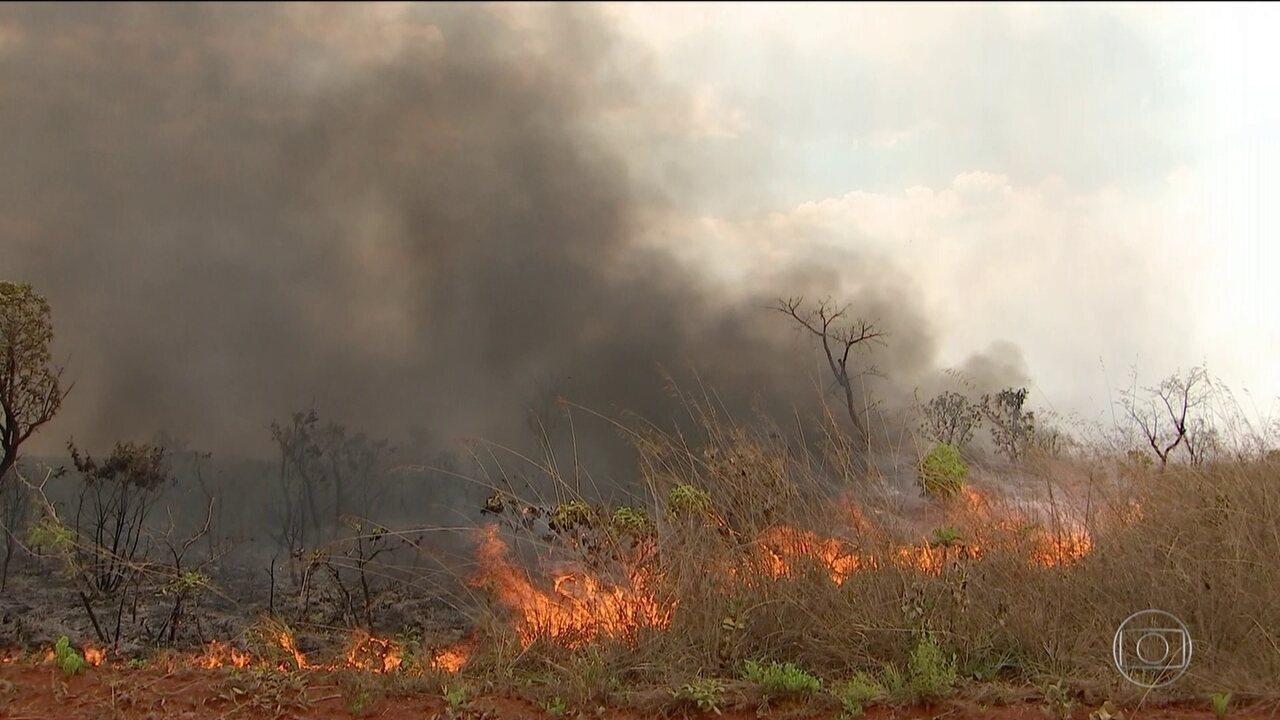 Amazônia e cerrado concentram 82% das queimadas no país