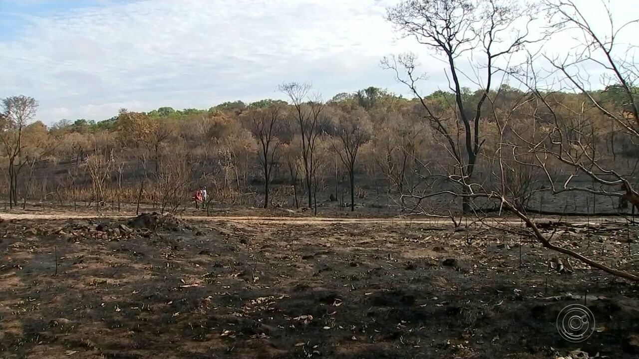 Recuperação de área do Jardim Botânico de Bauru atingida por incêndio deve levar 10 anos