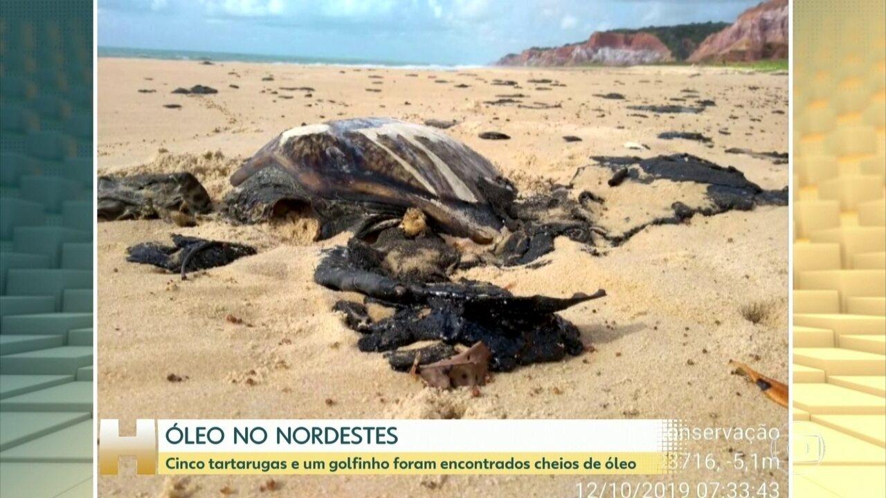 Cinco tartarugas e um golfinho foram encontrados cheios de óleo no litoral do Nordeste