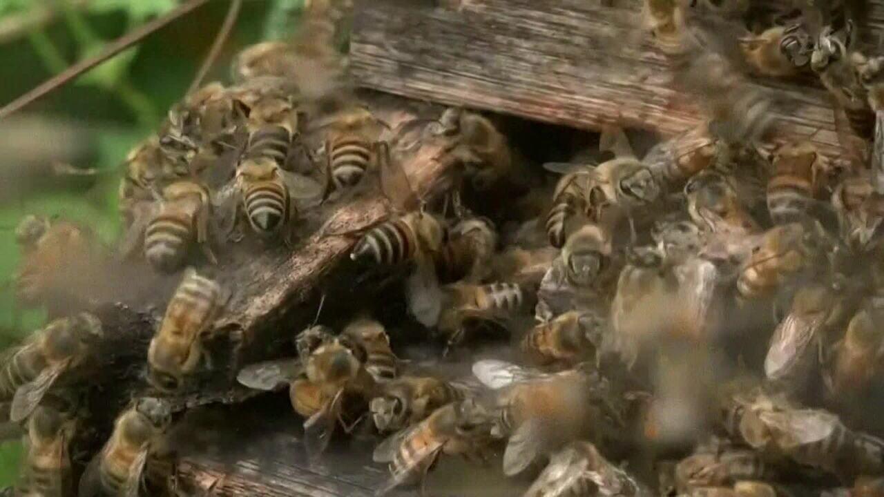Olhar Em Pauta: Morte de abelhas por agrotóxicos afeta apicultores do Rio Grande do Sul