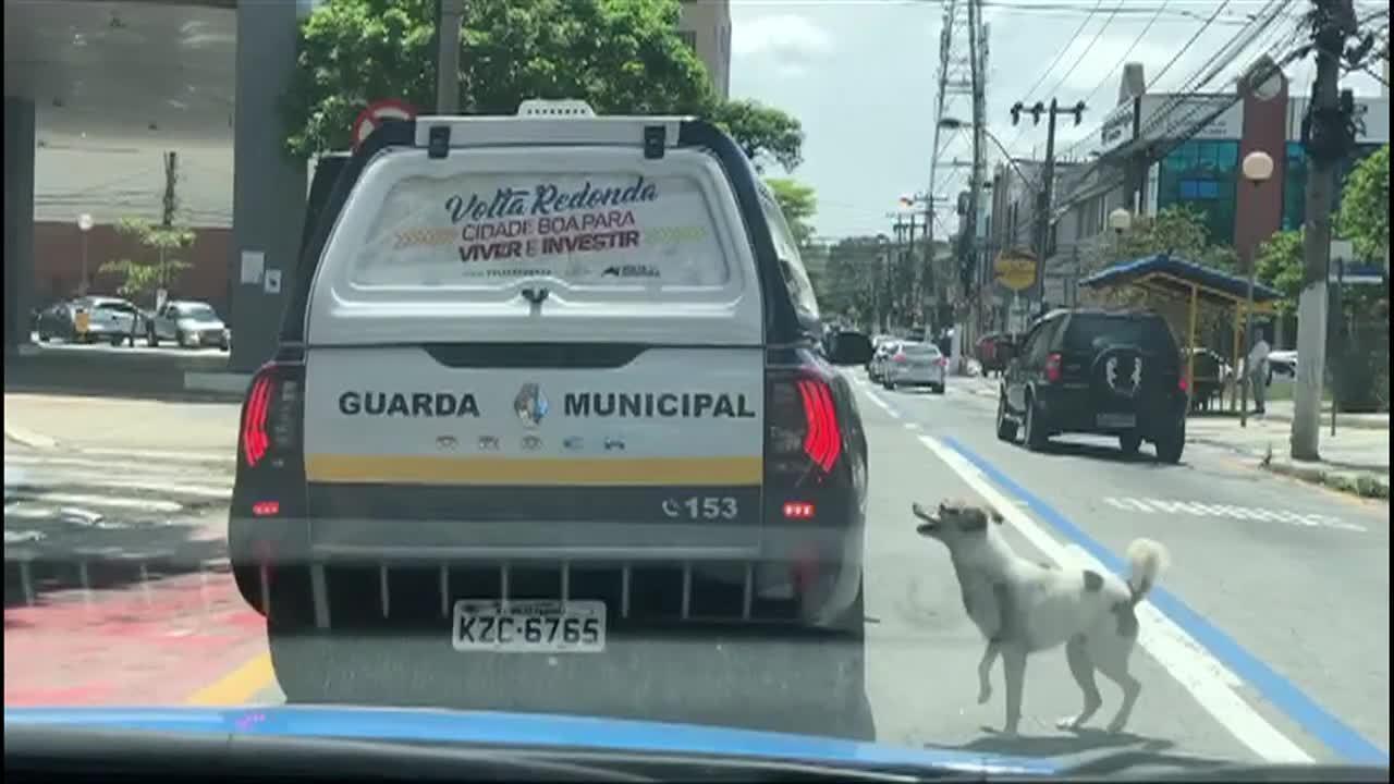Cachorro percorre 1 km atrás de viatura que levava tutor em Volta Redonda
