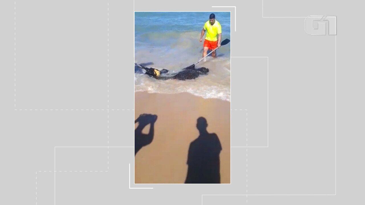 Manchas de óleo chegam a praias de Porto Seguro