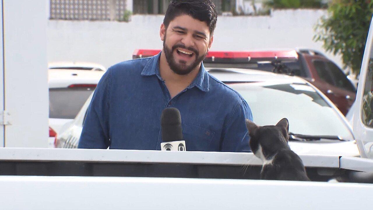 Gato aparece durante gravação e viraliza nas redes sociais, na Paraíba