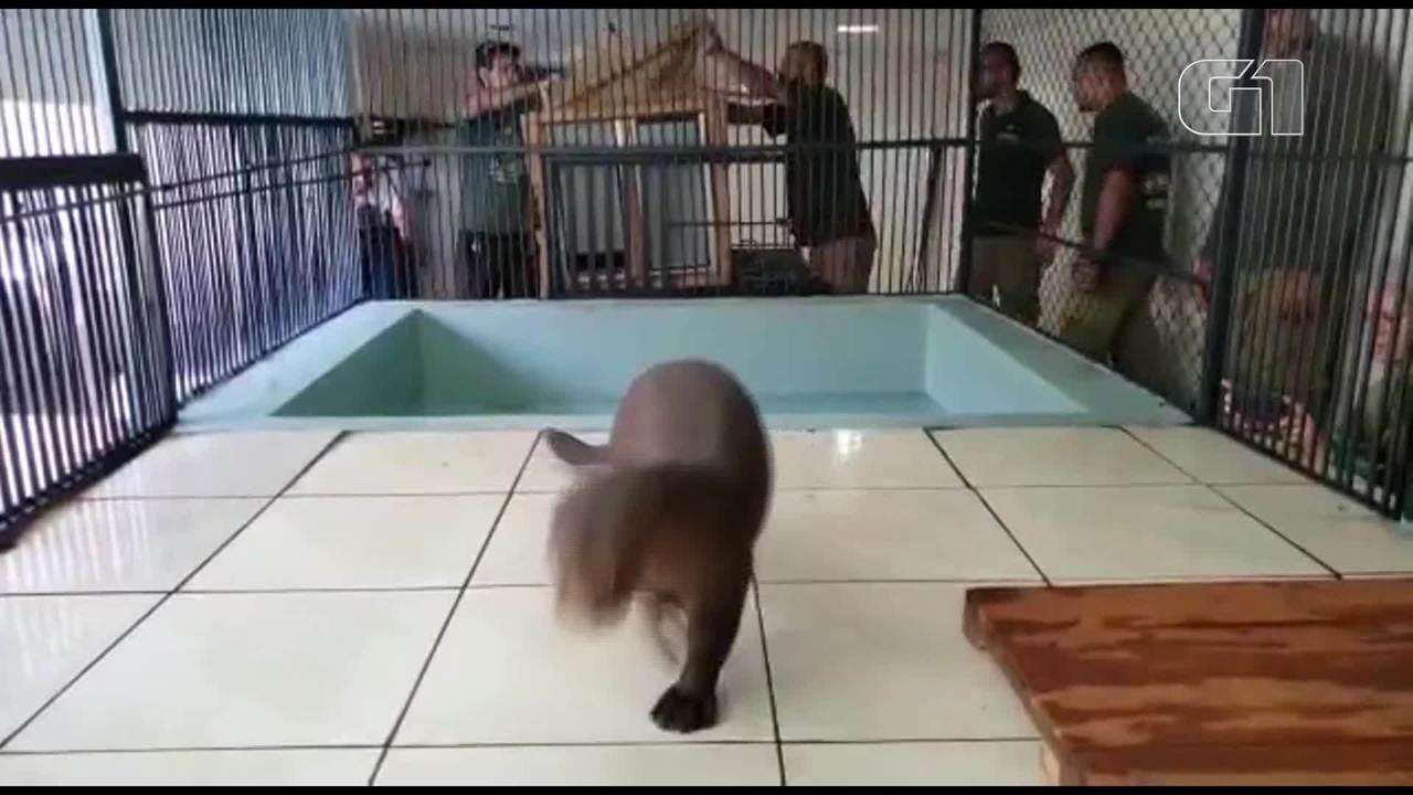 Ariranha da Alemanha chega ao Zoológico de Brasília