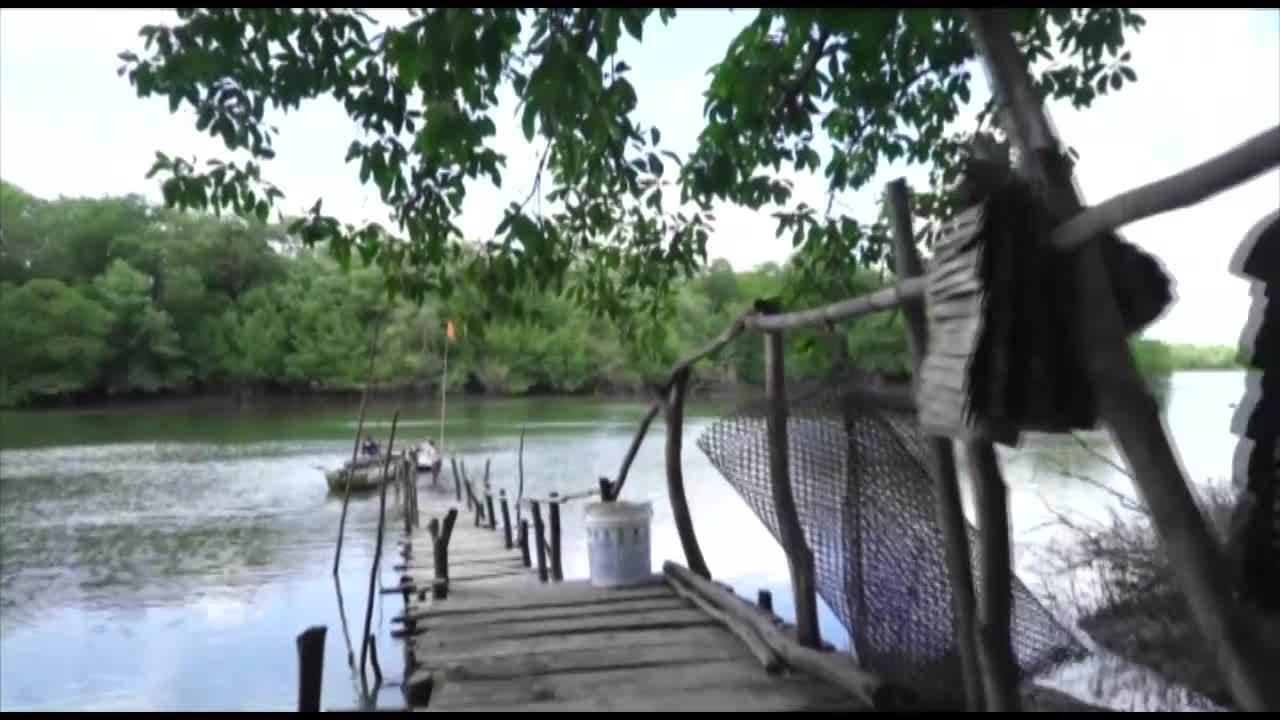 É do Pará mostra cultivo de ostras em Salinópolis, nordeste do Pará