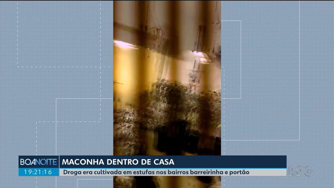 Polícia descobre plantações de maconha em duas casas em Curitiba
