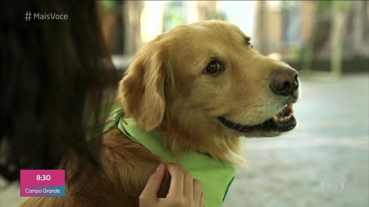 Ana Maria Braga transforma a Casa de Cristal em uma feira de adoção e recebe animais disponíveis para novos tutores