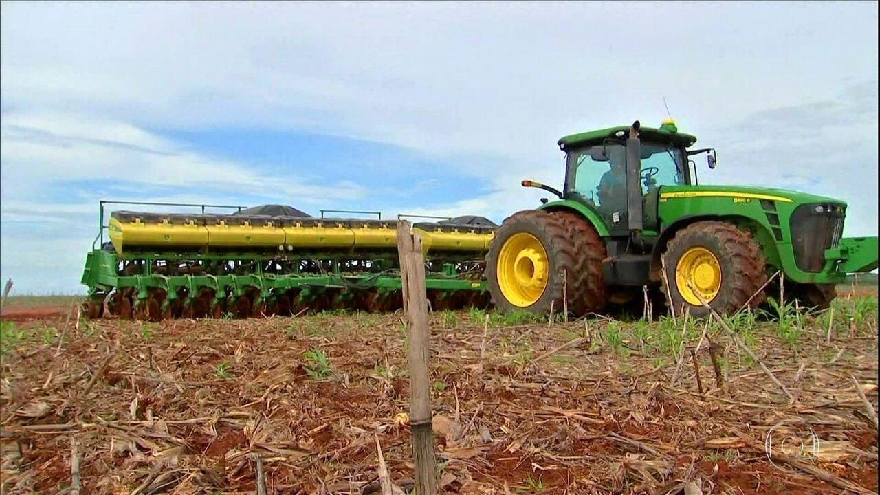 Produtores de soja de Mato Grosso antecipam vendas para evitar prejuízos com o replantio