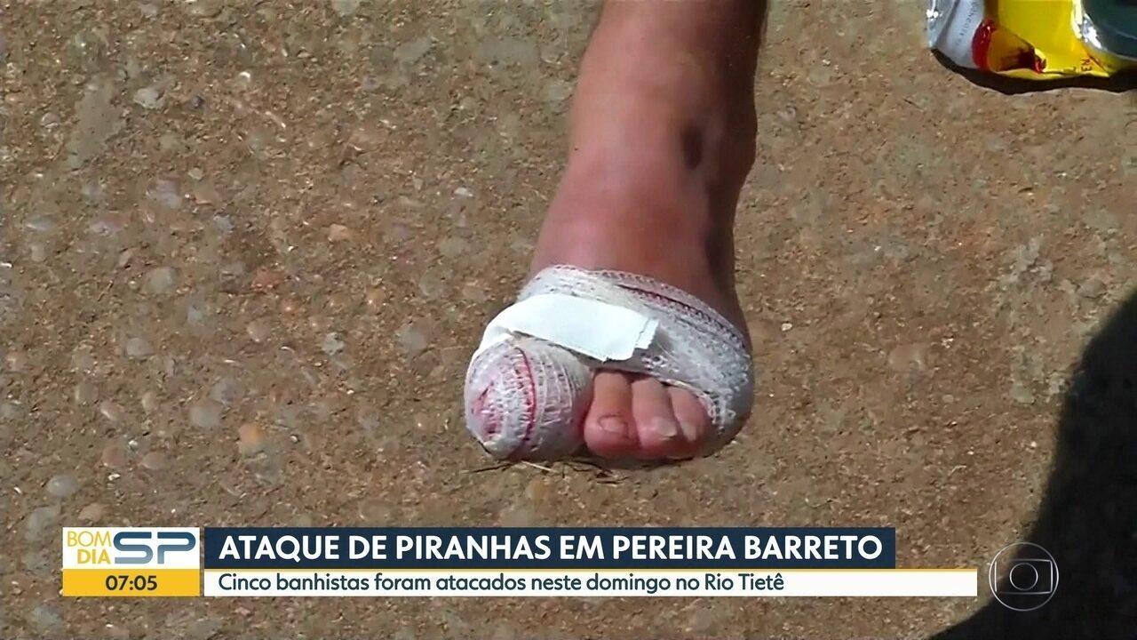Ataque de piranhas em Pereira Barreto, no interior do estado