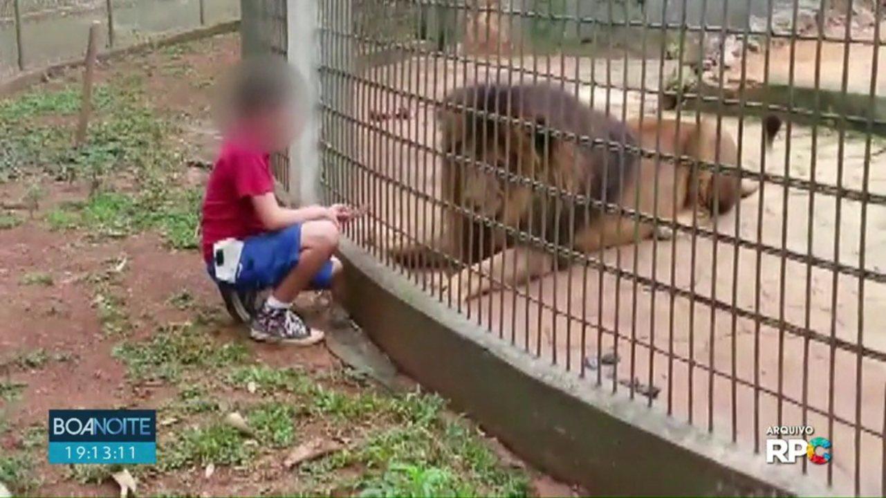 Pai de menino atacado por tigre em Cascavel é condenado pela justiça