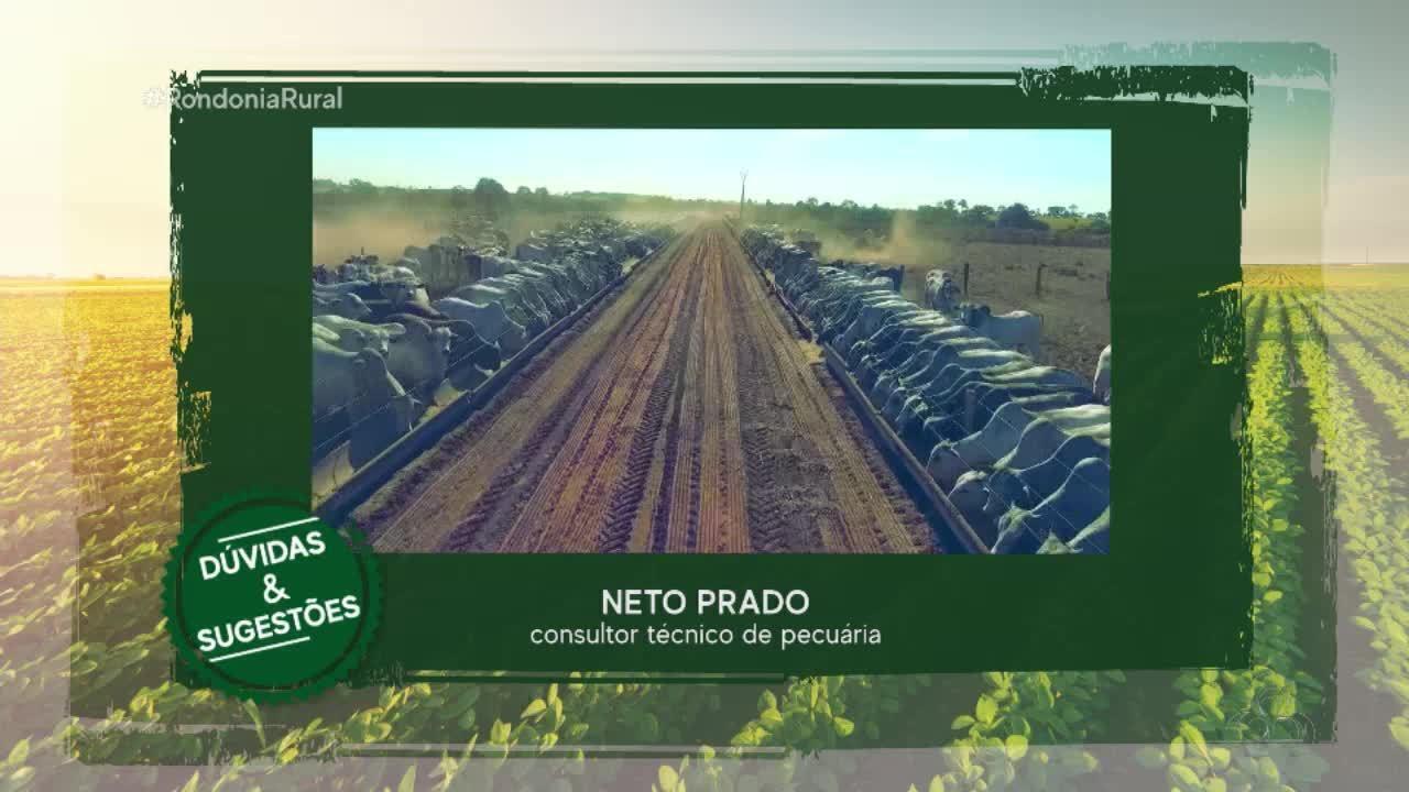 Arroba do boi gordo em alta em Rondônia
