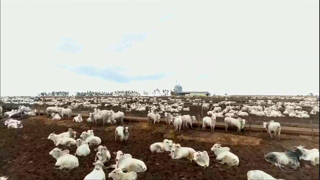 Com disparada no preço da arroba, Mato Grosso aumenta o gado confinado