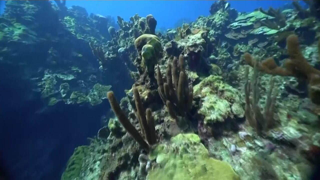Oceanos estão perdendo oxigênio devido às mudanças climáticas, alerta pesquisa