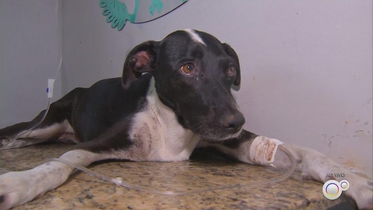 Cachorra foi resgatada com vida quase um mês depois de cair em precipício em Marília