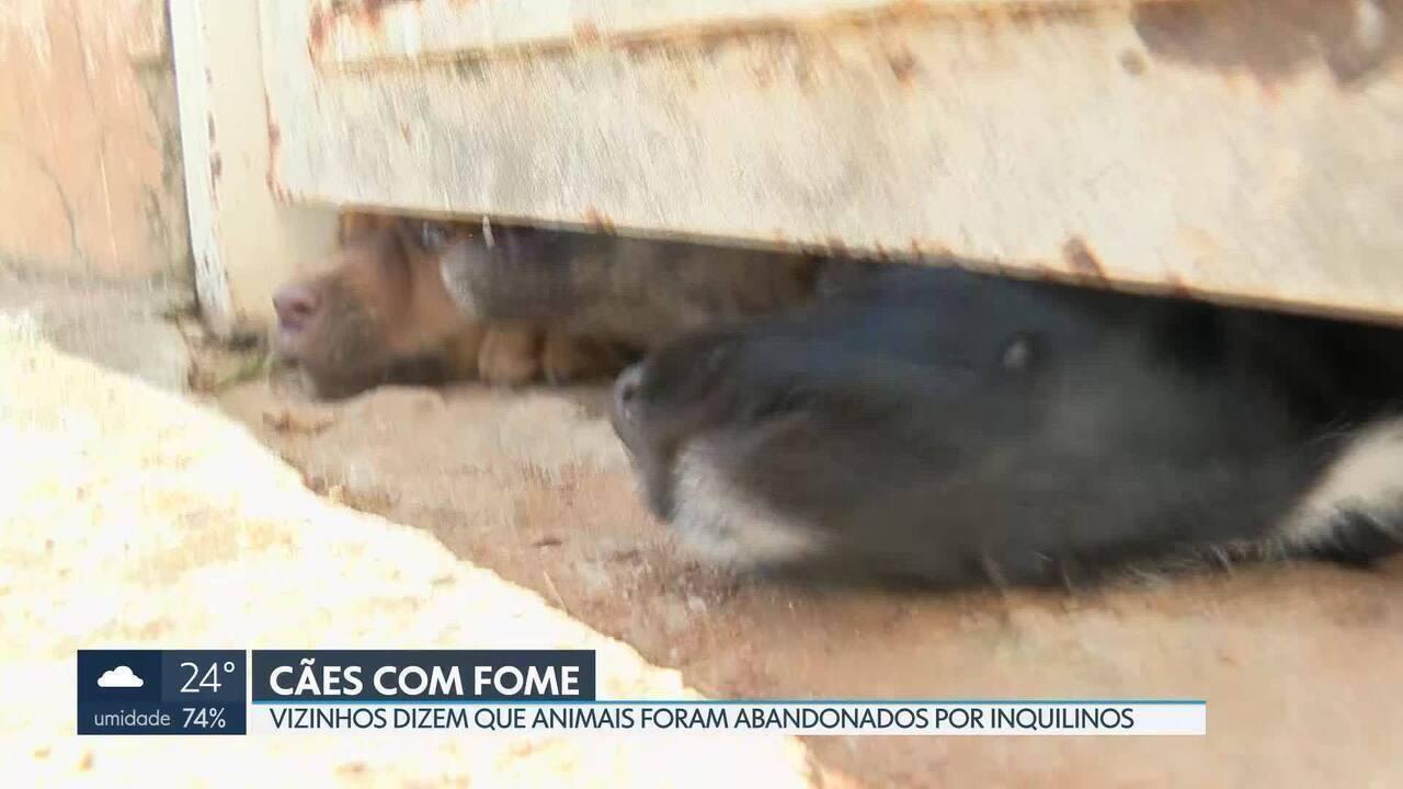 Cachorros são abandonados em Sobradinho