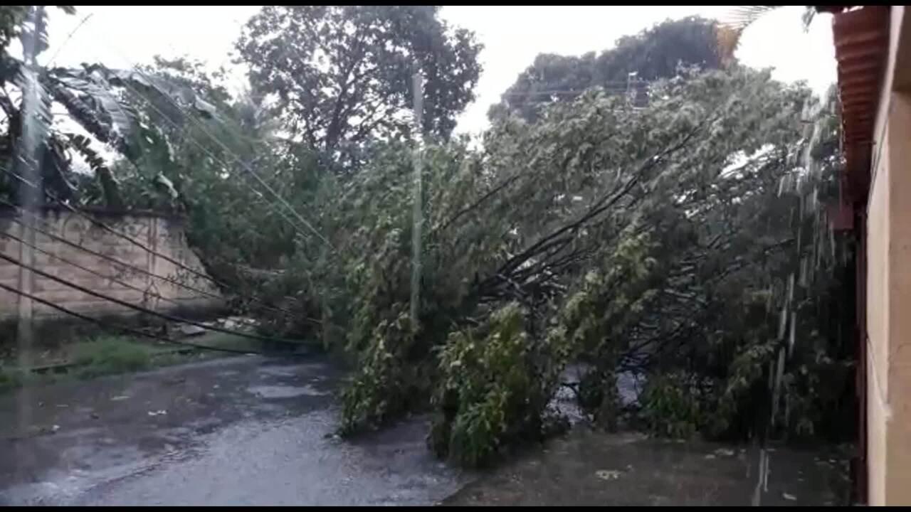 Árvore cai durante chuva e fecha rua na Região da Pampulha, em BH