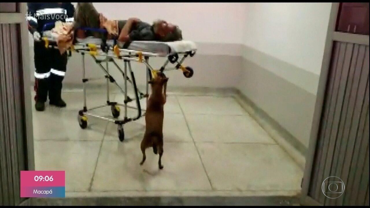 Muiot amor: cadelinha não sai de perto do dono nem no hospital