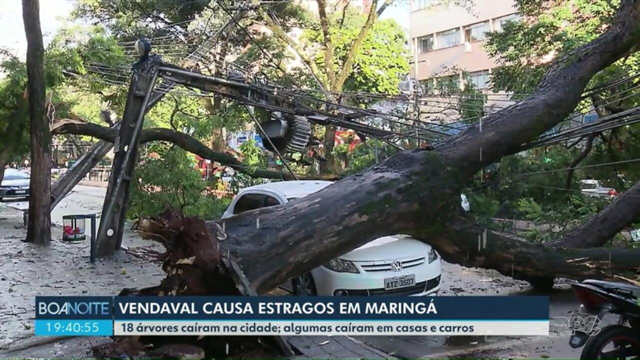 Dezoito árvores caem por causa de vendaval em Maringá