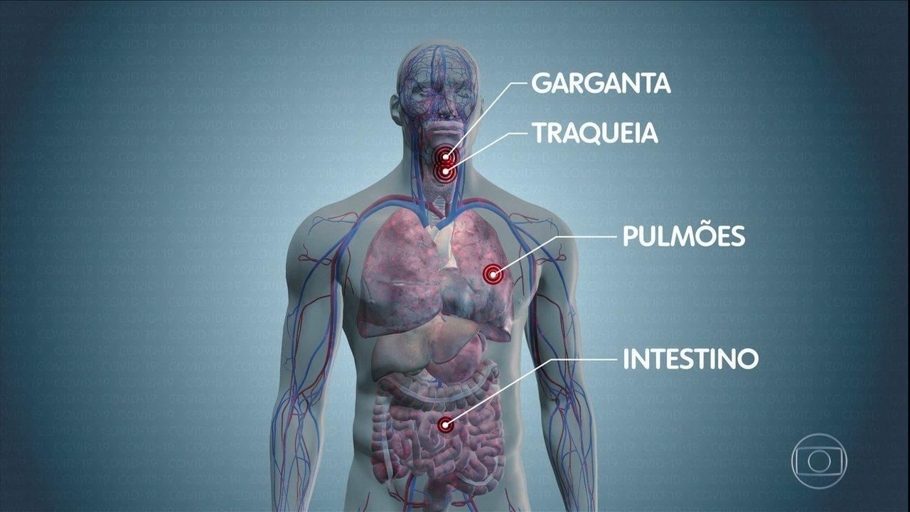 Veja o caminho do coronavírus pelo corpo humano