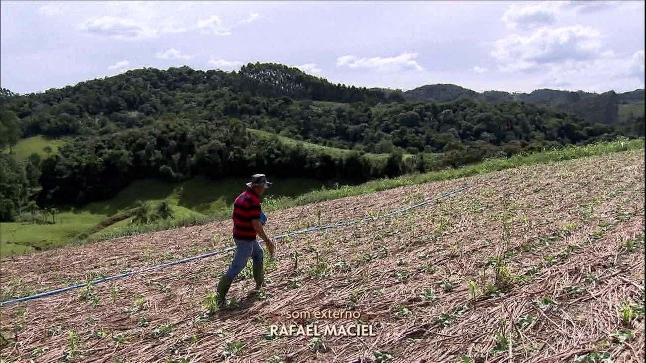 Agricultores de SC usam técnica com menos agrotóxicos na produção de hortaliças