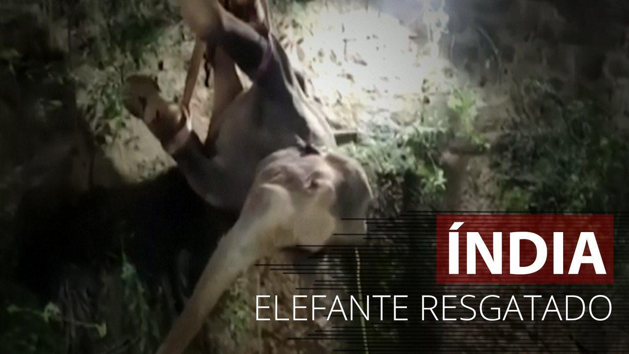 Elefante é resgatado de poço após 14 horas de operação da Índia