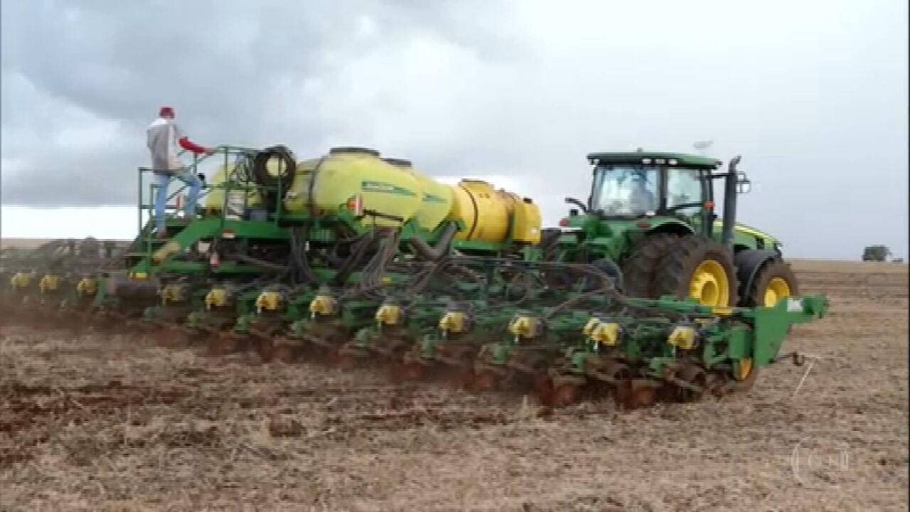 Produtores de Goiás investem mais no milho para aproveitar alta de preço