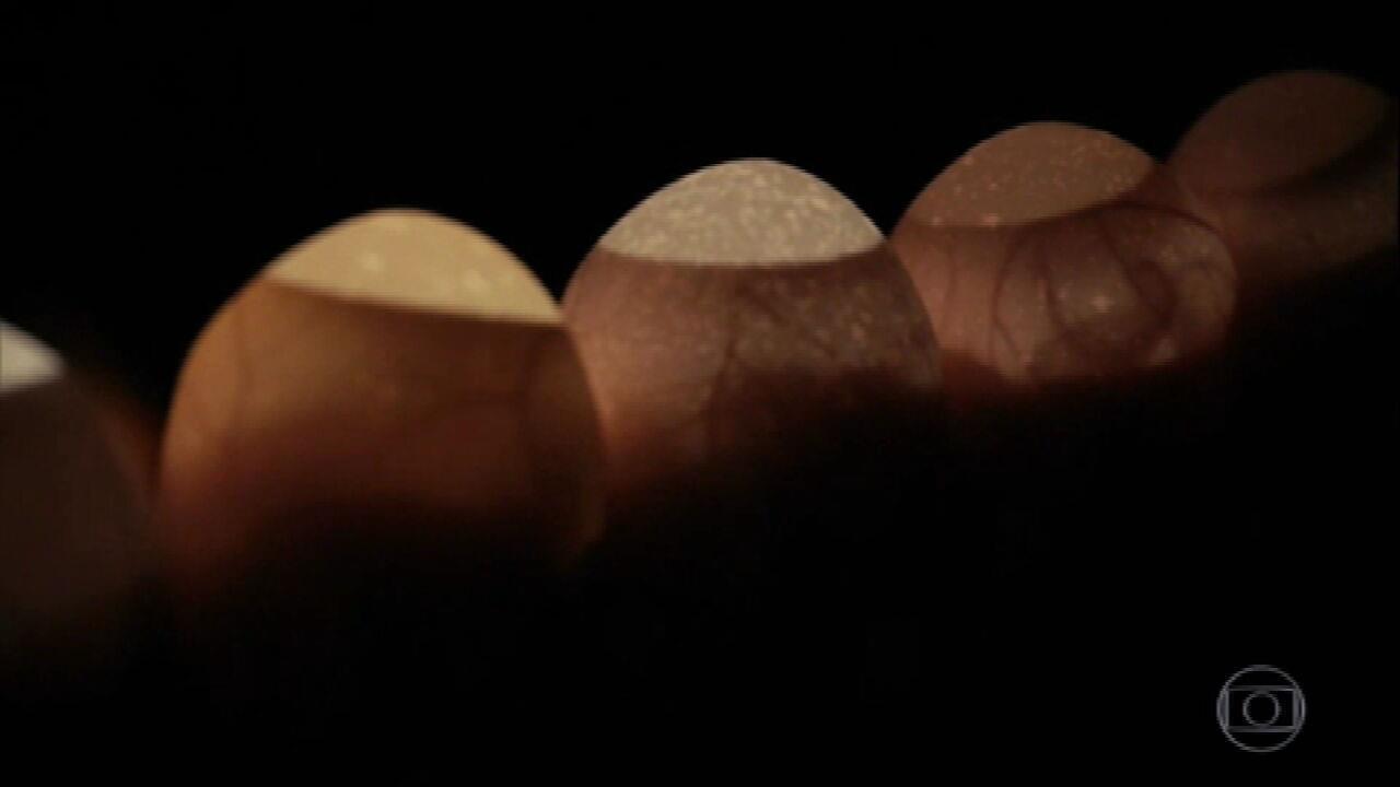 Granjas produzem ovos para a fabricação de vacinas contra a Covid-19 em SP